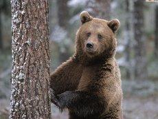 Животные Карпат кого можно встретить в украинских горах  12 животных которых можно встретить в Карпатах