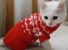 вязаная одежда для кота делаем своими руками статья