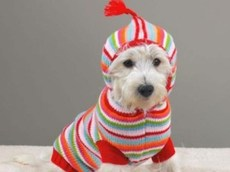 вязаная одежда для маленьких пород собак схемы как вязать статья